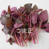 amaranthus160