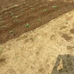 20160529-farm (16)